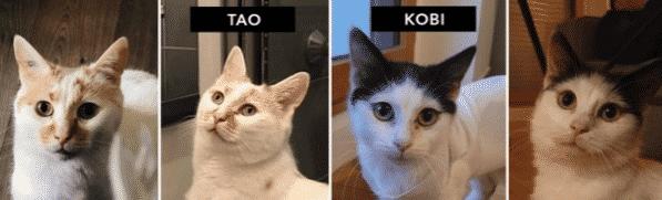 Une image contenant chat, assis, intérieur, mammifèreDescription générée automatiquement