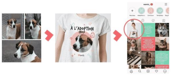 Une image contenant chien, regardantDescription générée automatiquement